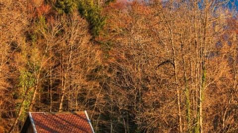 Cabane avec vue, Taninges, avril 2020