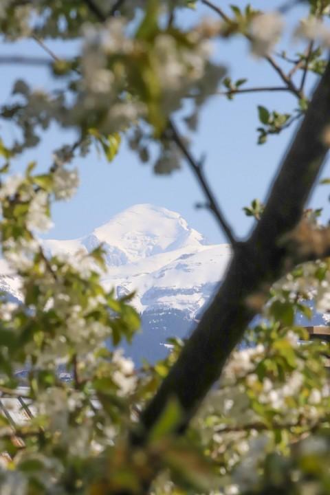 Mont-Blanc encadré, Taninges, avril 2020