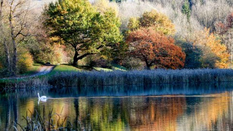 Lac de Flérier, Taninges, novembre 2016