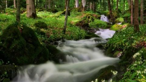 Balade dans les bois, Taninges, mai 2018