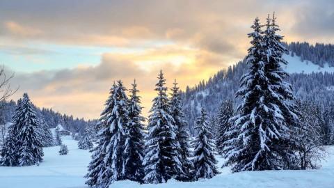 Paysages d'hiver au Praz-de-Lys, janvier 2021
