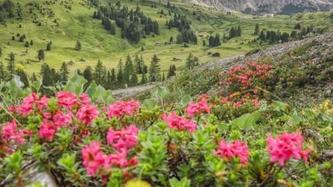 Selva di Val Gardena, Les Dolomites, Italie, août 2021